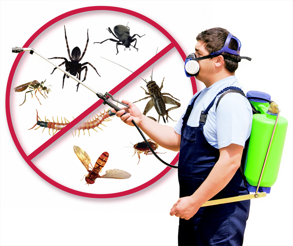 Antworks Pest Control Portland Vancouver