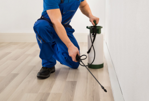 Tips to Control Domestic Pests in Arizona Professionally