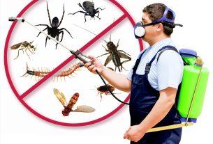 Antworks Pest Control Portland Vancouver